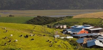 Marin Agricultural Lands